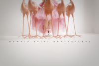 walking pink flamingos Pittsburgh child photographer pamela salai photography